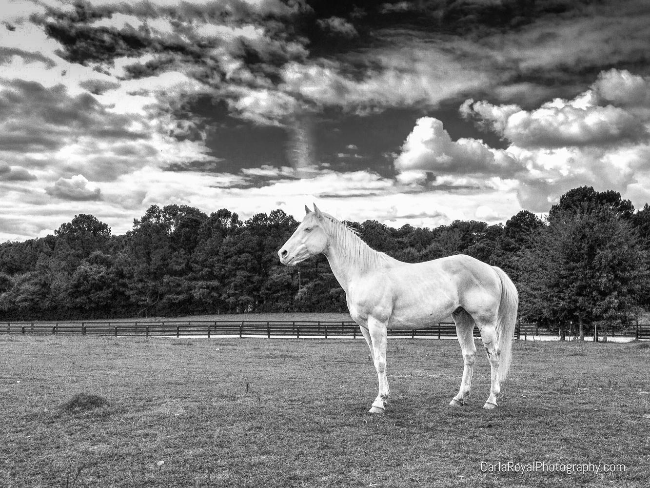 Tobe. My sister's horse!