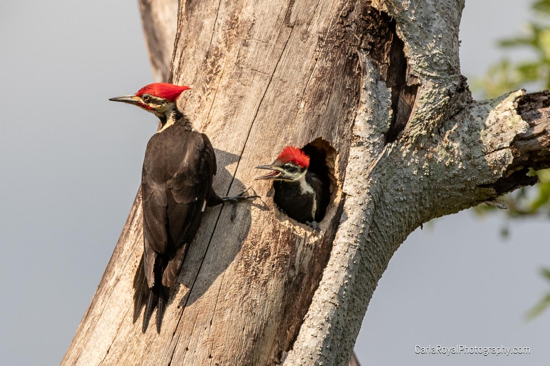 woodpecker-5.jpg