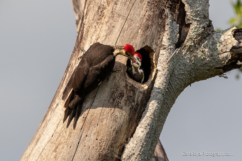 woodpecker-6.jpg