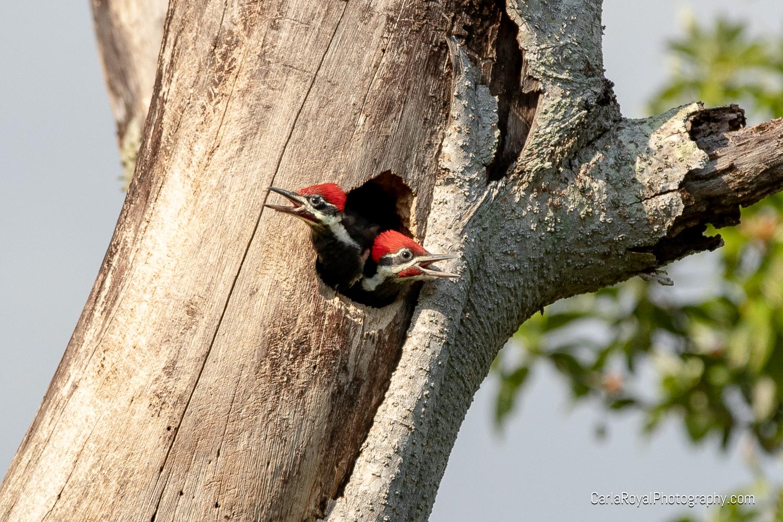 woodpecker-10.jpg
