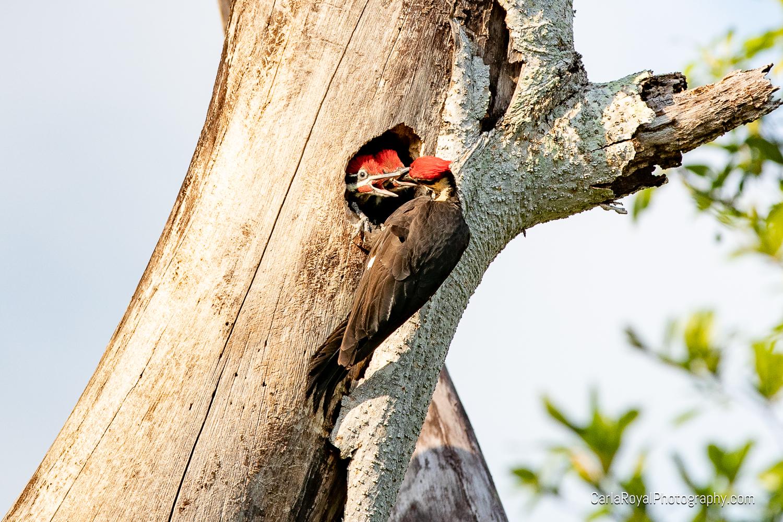 woodpecker-13.jpg
