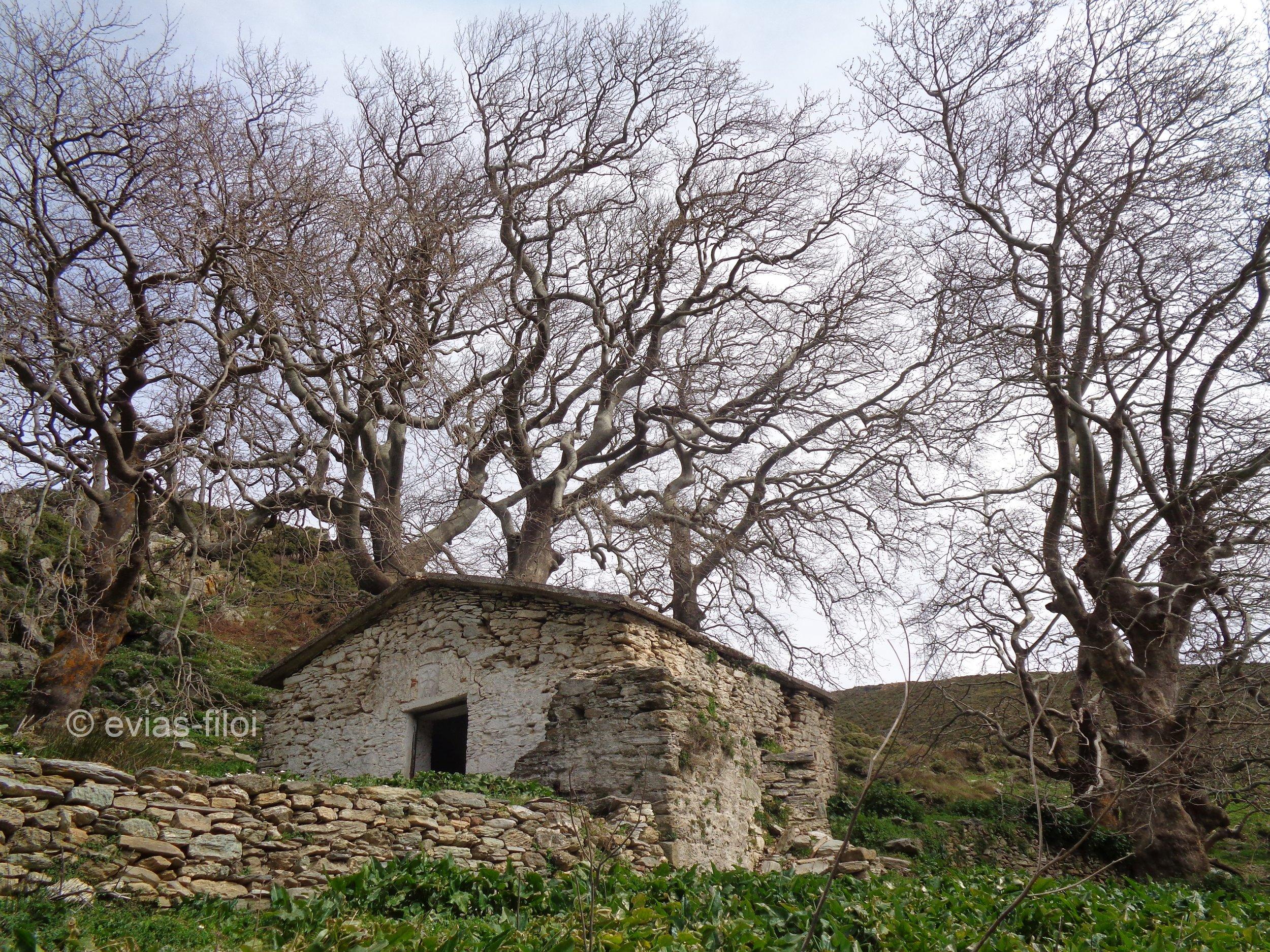 Μοντοφώλι-η πανέμορφη παλιά εκκλησία στις ρίζες των τεράστιων πλάτανων
