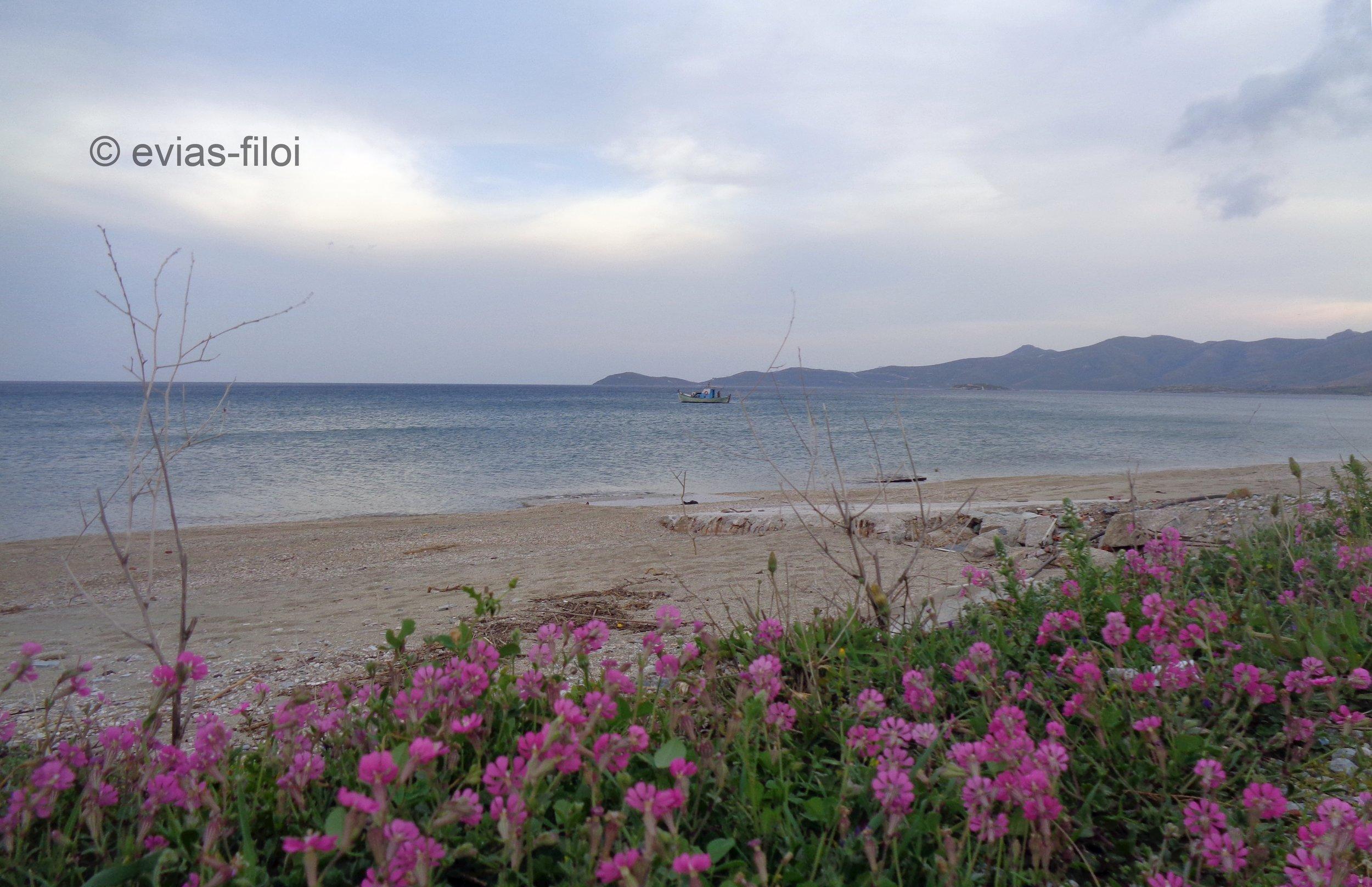 Στην παραλία της Γαλλίδας - δυτική πλευρά της Καρύστου