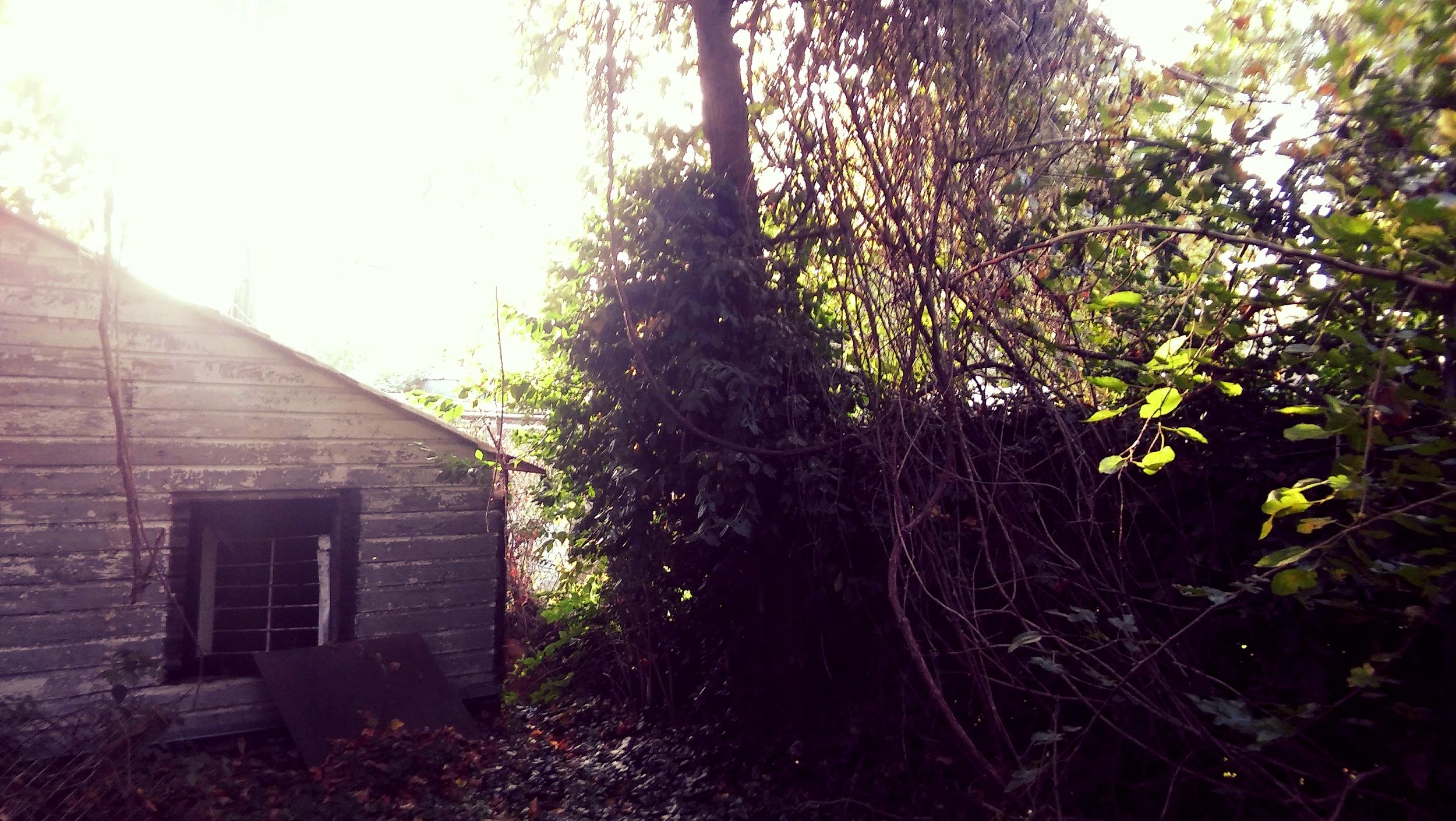 Backyard of 3650 California Before Renovation