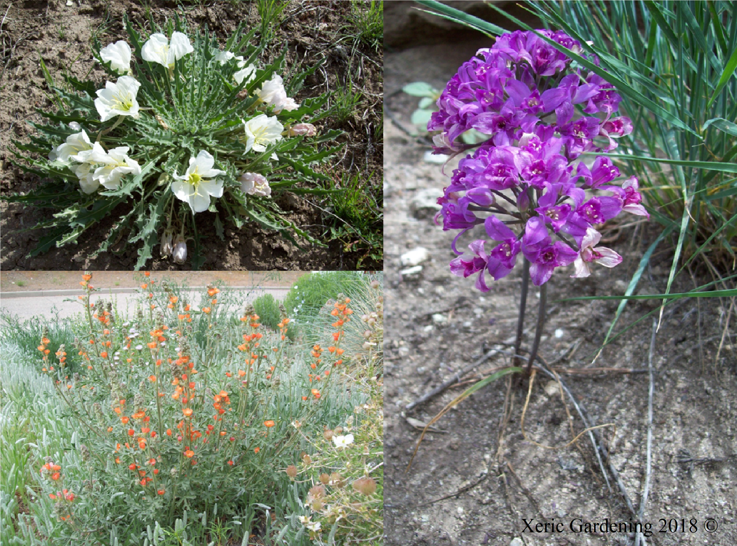Ecological projects - We have recently started to pair with different organizations to promote pollinator gardens, student native plant projects, and the rehabilitation/restoration of the foothills.