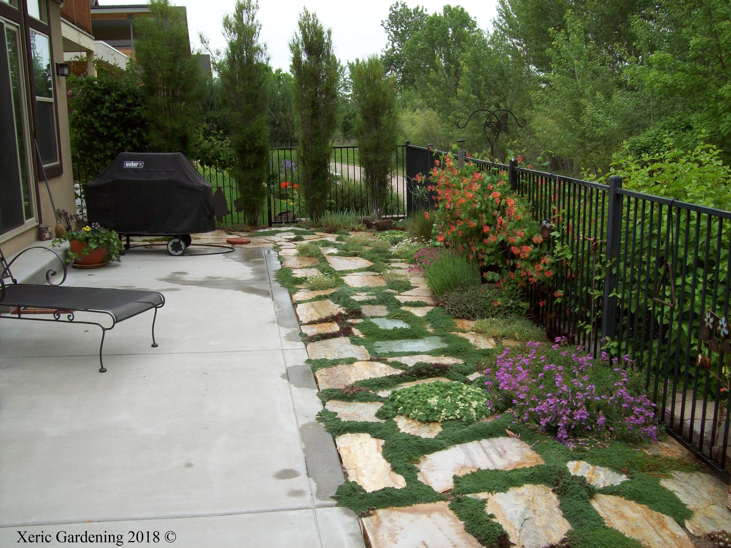 Formal... - Though we tend to have a more naturalistic style, xeric principles are easily applied to a more formal setting. This north-facing garden gets watered once a week.