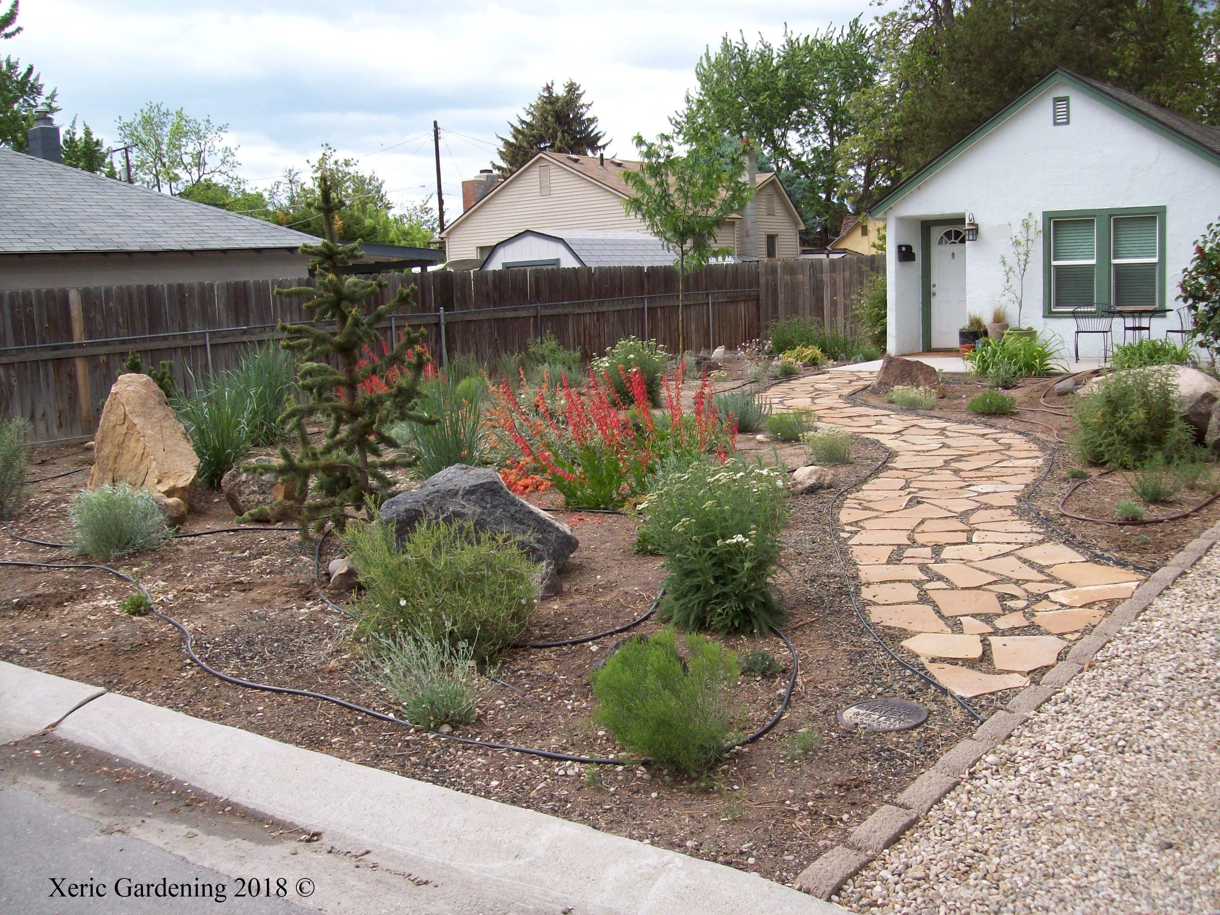 YEAR 3  This landscape filled in so beautifully that it was part of the 2017 Idaho Botanical Garden Tour. Drip lines will be removed at the beginning of the fourth year, since this garden should flourish with just the rainfall we get in this area.