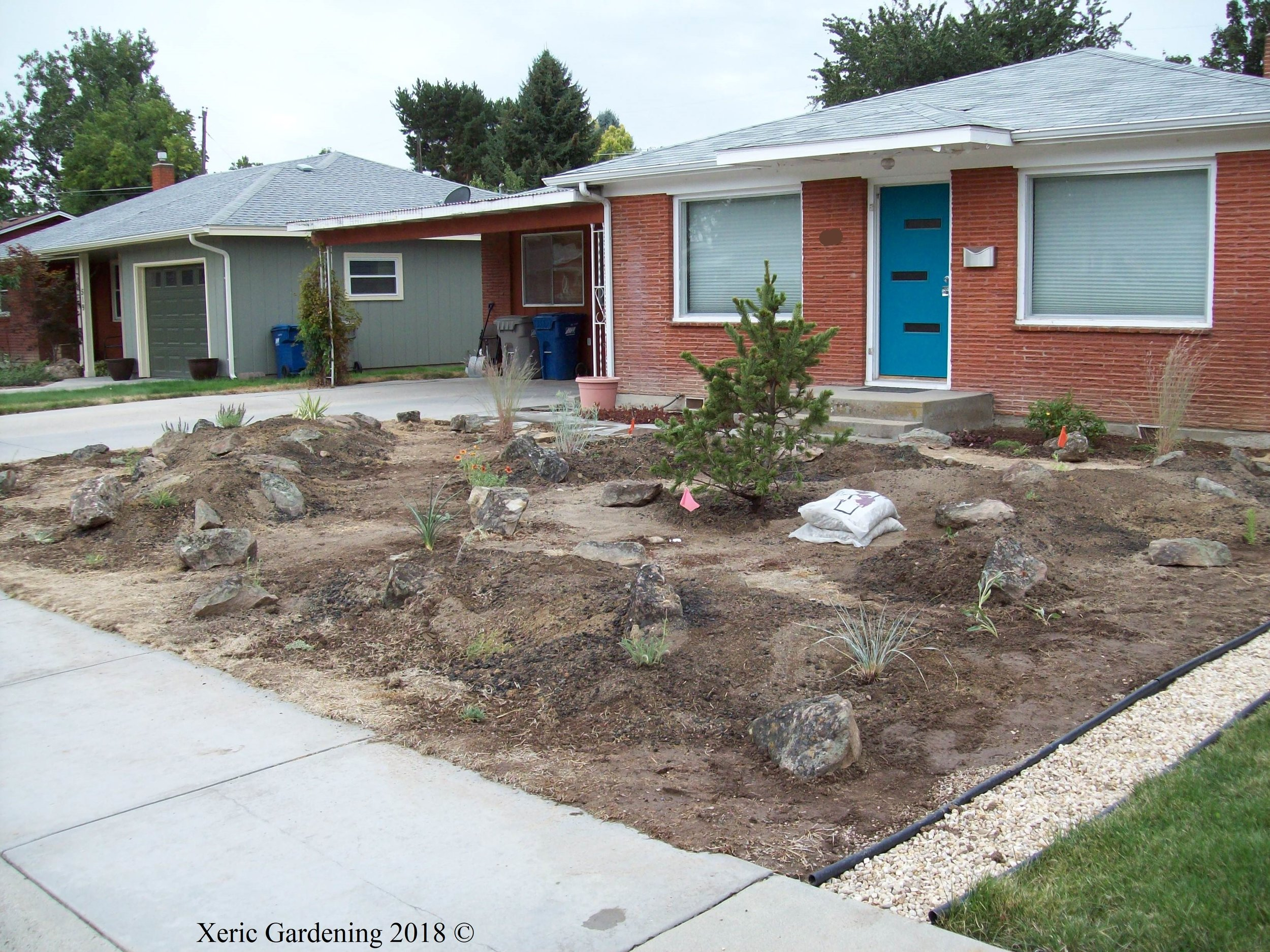 YEAR 2  As plants were going in, we had to create a border with the neighbor's lawn to keep grass from creeping in (notice edging in bottom right corner).