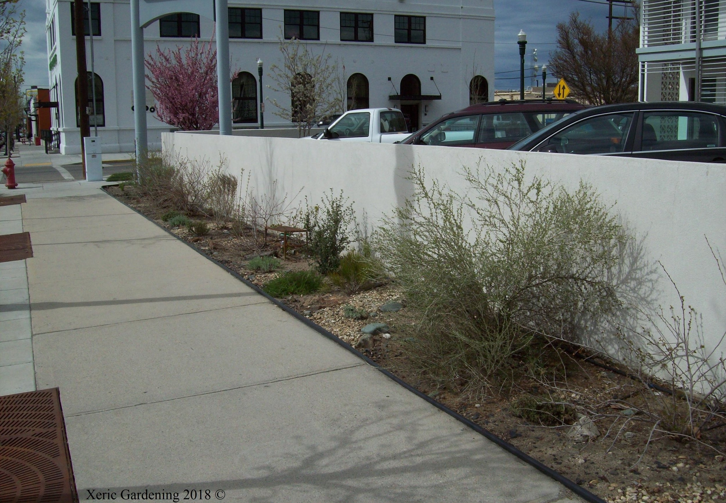 - This commercial building had a south-facing hell strip and a wall, which increased the oven effect, but made it possible to put in taller shrubs, too. We have combined shrubs with flowering perennials to give color and height throughout the year.