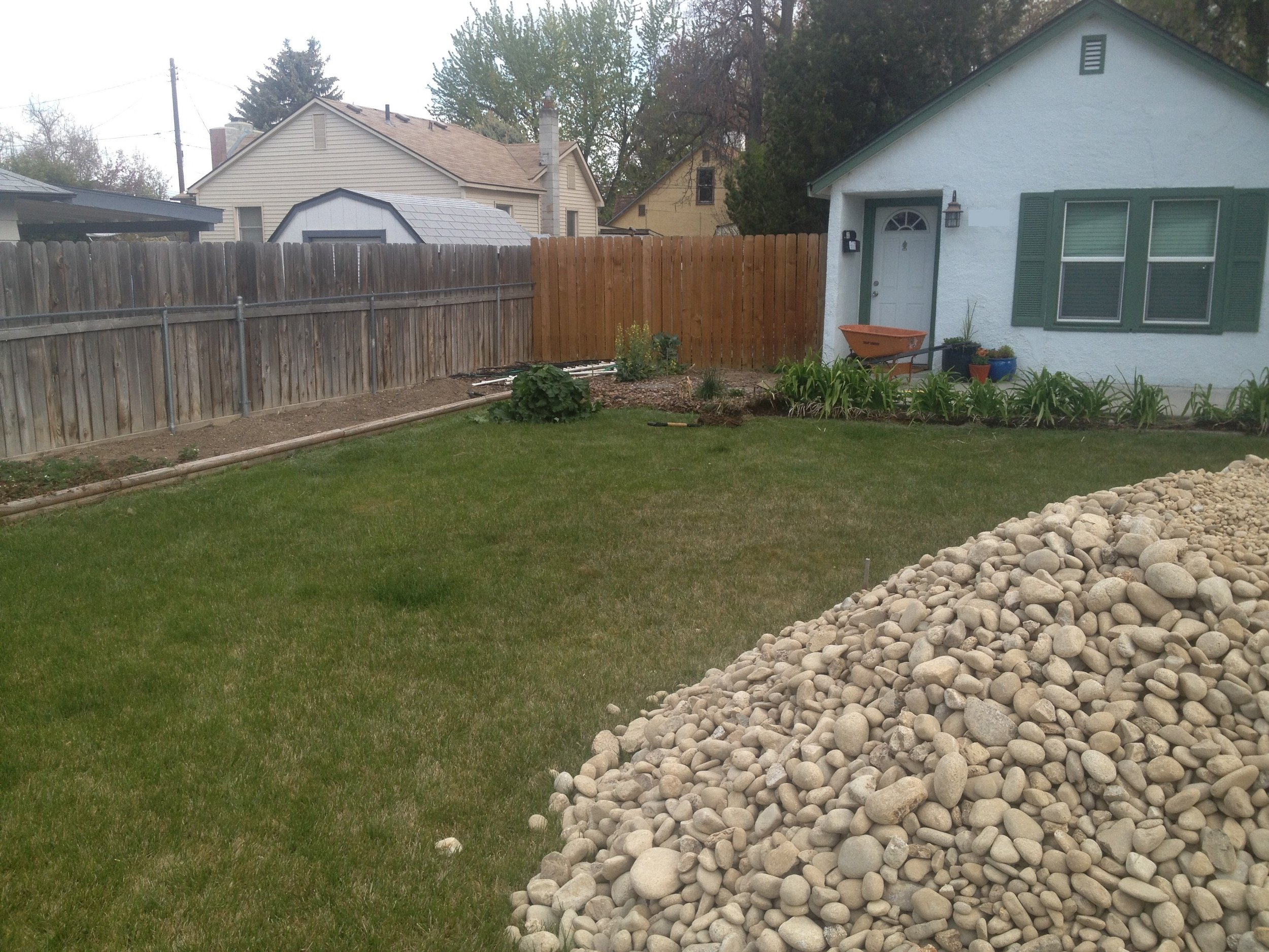 YEAR 1  Over the lawn that the homeowners removed, we added berms of a topsoil mix, drip lines, and plants, such as fringed sage, fleabane, Texas red yucca, and sagebrush.