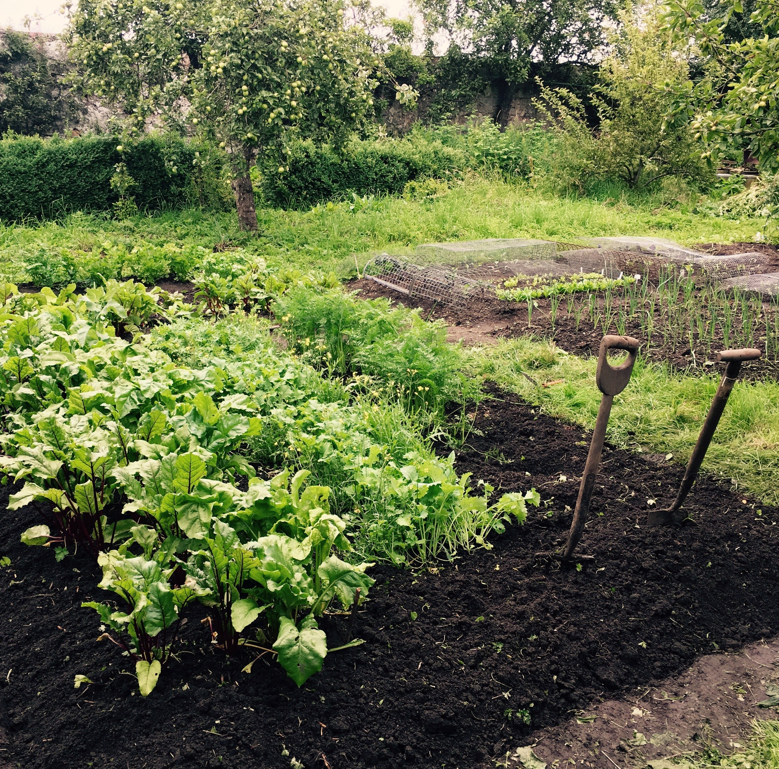 Food Fundamentals: Rethinking Health from the Ground Up - Sat. 21st Apr, 10-3pm