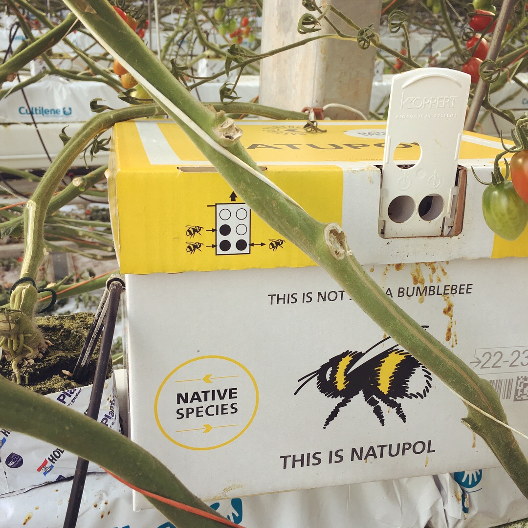 This is not a bumblebee: this is Natupol!