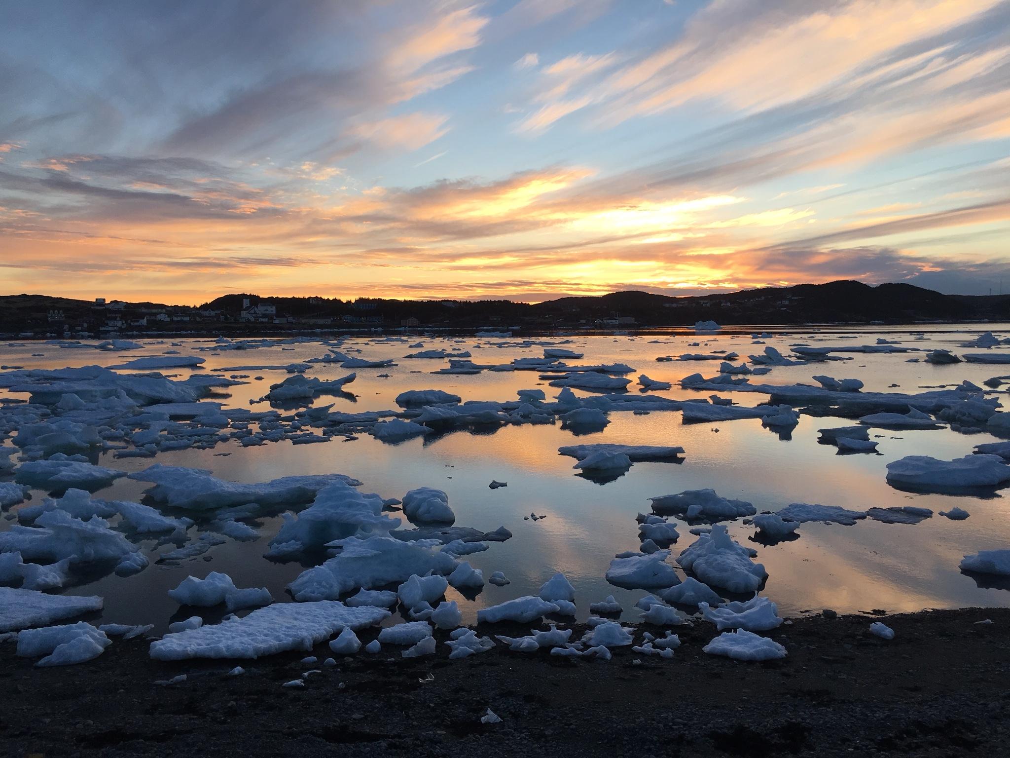 The iceberg laden springtime sea near The Wild's Coral Cabin
