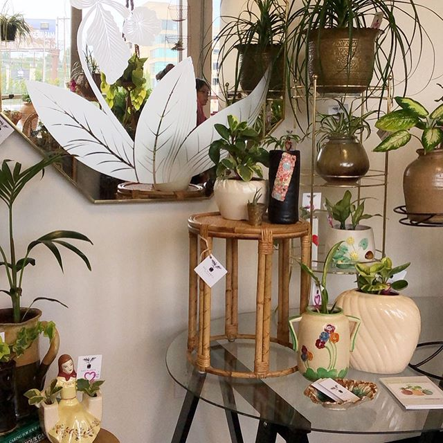 Our hope is that our entire space @pacificgalleries inspires creative ways to display plants, particularly using vintage pieces, because it's better for the environment, AND it's unique! 💞  Here are a few of our favorite PLANT STANDS we currently have in stock~ *Round rattan plant stand- SOLD *MCM tripod plant stand/side table, $72 *MCM Black iron 3 plant stand, $85 *Wicker daisy shelf, $52 *Brass 3 tier plant stand, $89 *Round wicker coffee table/plant stand, $85 *MCM Danny Ho Fung rattan swivel stool, $85 *Small rectangular rattan plant stand, $40 • • • • •#interiordesign #houseplantclub #parlorpalm #houseplants, #indoorplants, #airplants, #plants, #plantsofinstagram, #plantstyling, #plantsmakepeoplehappy  #seattle #shopsmall #smallbusiness #jungalowstyle #interiorinspirations #vintage #homedecor #seattle #plantsarefriends #hangingplants #rattanfurniture #midcenturymodern #wickerfurniture #pacificgalleries #plantstand #plantstands