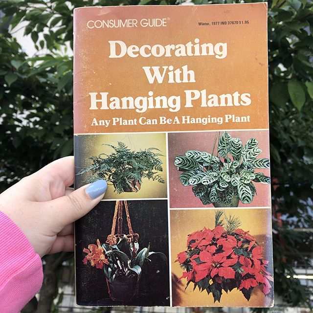 Short on space? Have a cute pet that likes a plant snack? Just trying to create an indoor jungle ~vibe~?! Any plant can be a hanging plant! We've got tons of plants that could be hung (or not!) @pacificgalleries right now!! Plus, we've got great vintage plant hangers, and plant books for inspiration, as well! Stop by this wknd, open every day 10-6pm!! • • • • •#interiordesign #houseplantclub #parlorpalm #houseplants, #indoorplants, #airplants, #plants, #plantsofinstagram, #plantstyling, #plantsmakepeoplehappy, #tillandsia  #seattle #shopsmall #smallbusiness #jungalowstyle #interiorinspirations #vintage #homedecor #seattle #plantsarefriends  #parlorpalm #sodo #pacificgalleries #rattan #wickerfurniture #greenhouse #diy #books #coffeetabledecor