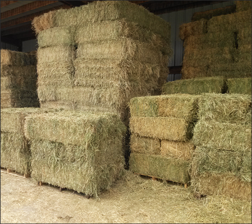 All of our hay comes from the El Centro Valley. Each bale weighs on average 100-120 pounds, and our straw weighs 80-90 pounds.