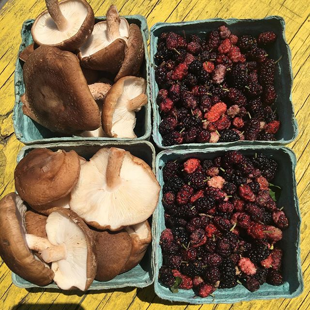 Brooklyn!  Come see me!  12-5pm  @catlandbooks  I got all the mushroom foods and wild foraged foods!  Pictured are our log grown Shiitake mushrooms from the #fingerlakes and wild harvested #mulberries  Come say hey!  The market is free! Its breezy in here!  Yay!  #smugtownmushrooms #mycology #fungi #wildfood #brooklyn #newyork