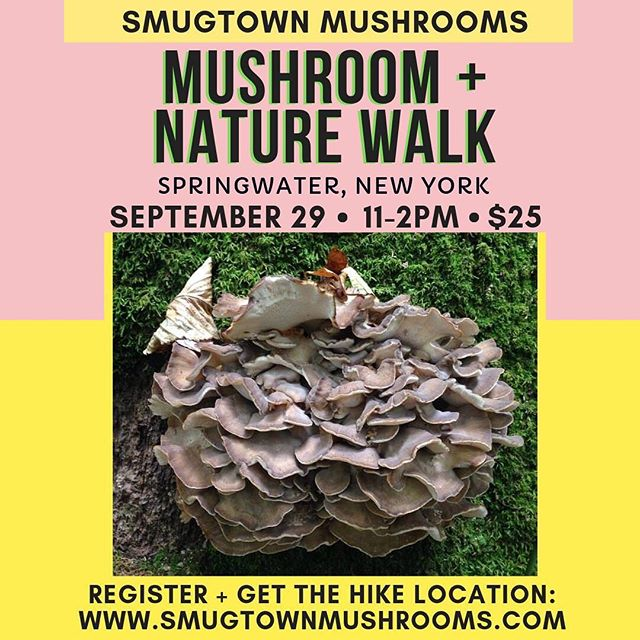 Good morning and Happy belated Autumnal Equinox.  I've been amazed at the amount of rain and the fungi that have shown up this week!  Only a handful of spots left for my one and only mushroom walk I'm offering this year in the Rochester area.  Rain or shine!  Snacks included at the end of the walk.  Come explore the hills south of Rochester with me. SLOW DOWN and listen to what the forest is telling us!  We will cover topics of ethical harvesting, wild identification, ecology and how to begin our journey as being stewards of the land.  You won't hear me talking like some TV show chump, telling ya how much some mushroom is worth.  That's on TV already and it's total crap. So yea, leave the boob tube and step outside and let nature in!  Registration is needed to obtain the exact location of the hike!  www.SmugtownMushrooms.com  #smugtownmushrooms #mycology #fungi #ethicalforaging #reciprocity #love #fingerlakes #flx #magic #rochesterny #hemlocklake #mycelium #mycorrhizae #maitake #grifolafrondosa #henofthewoods #wildmushrooms