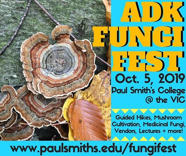 ADIRONDACK FUNGI FEST THIS SATURDAY!  Come to this full of Myco fun!  Join me as I return to traditional Mohawk territory and visit Paul Smiths College for the Fungi Fest  Guided walks, vendors, classes on mushrooms cultivation(taught by yours truly) and class on mushroom medicine by @catskillfungi and MORE!  More info at @paulsmiths  www.paulsmiths.edu/fungifest  See everyone there! We're bound to find lots of mushroom buddies and to have a great time with a bunch of Myco-elders, nerds, and more!  Find Smugtown Mushroom there all day.  #smugtownmushrooms #adks #adirondacks #mohawkterritory #fungi #mycology #mycelium #mushroomcultivation