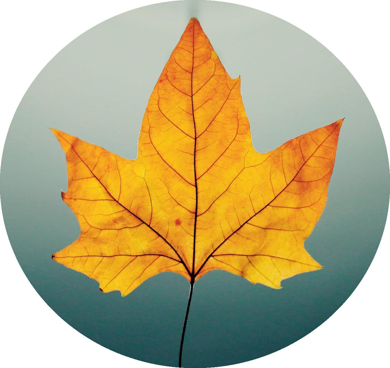 fall leaf.png