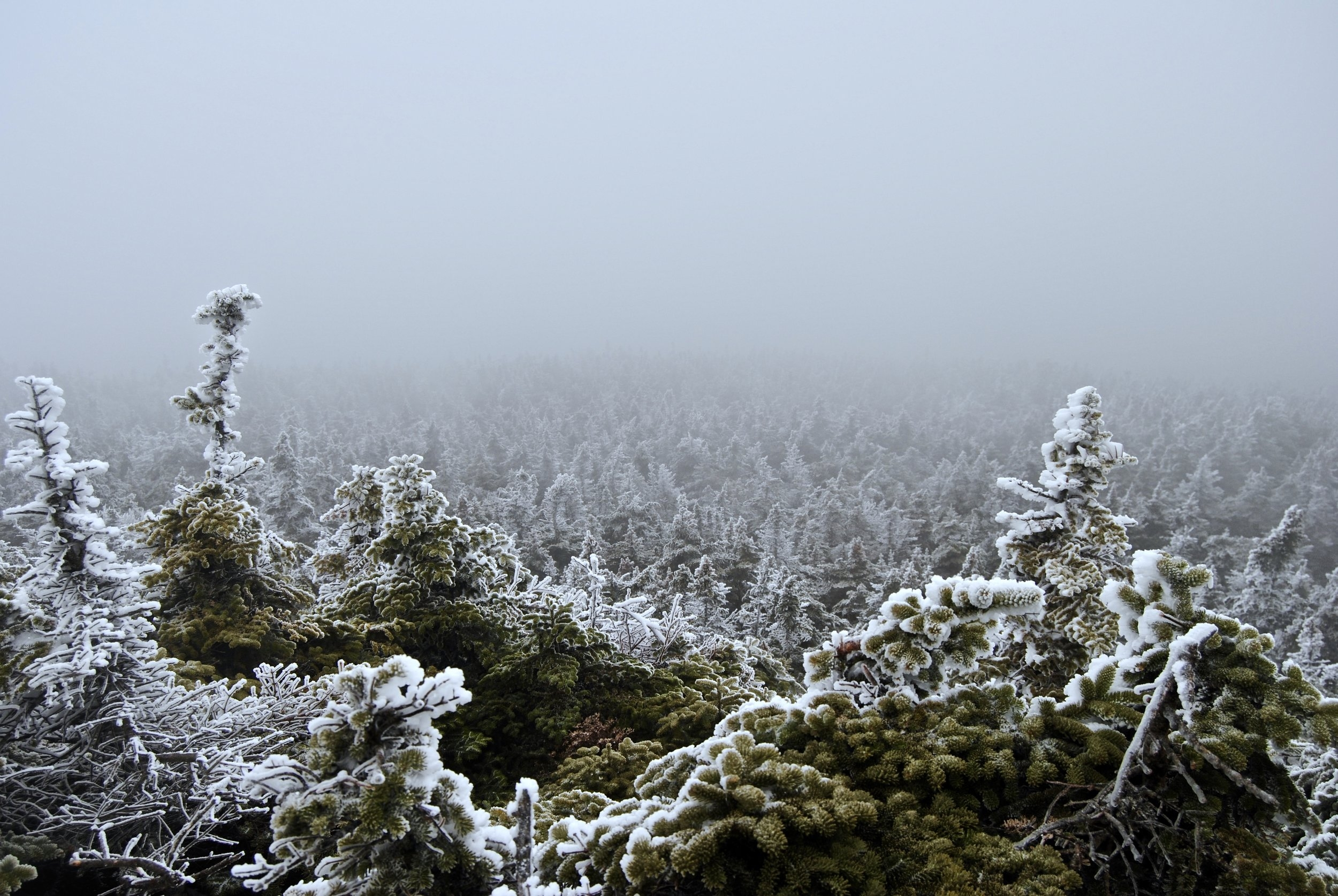 No view, per usual winter weather. But those pines...