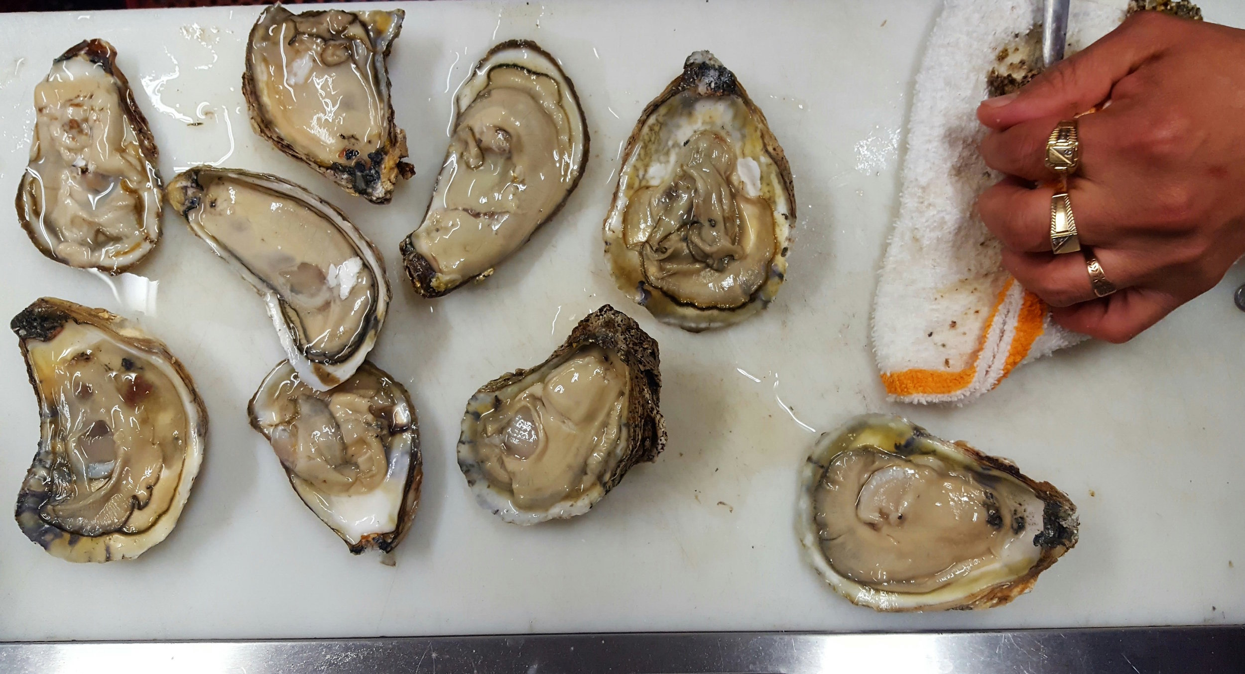 Oysters Happy Hour.jpg