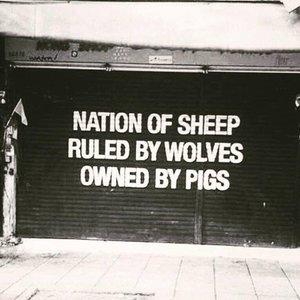 sheeps+.jpg