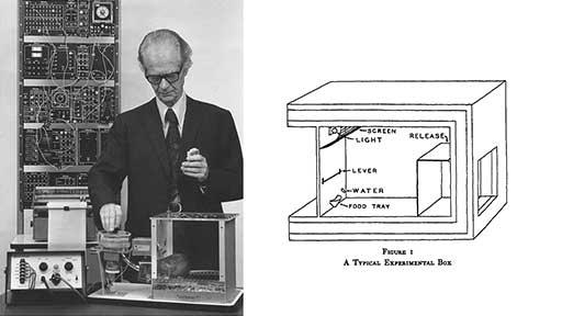 skinner's mouse box.jpg