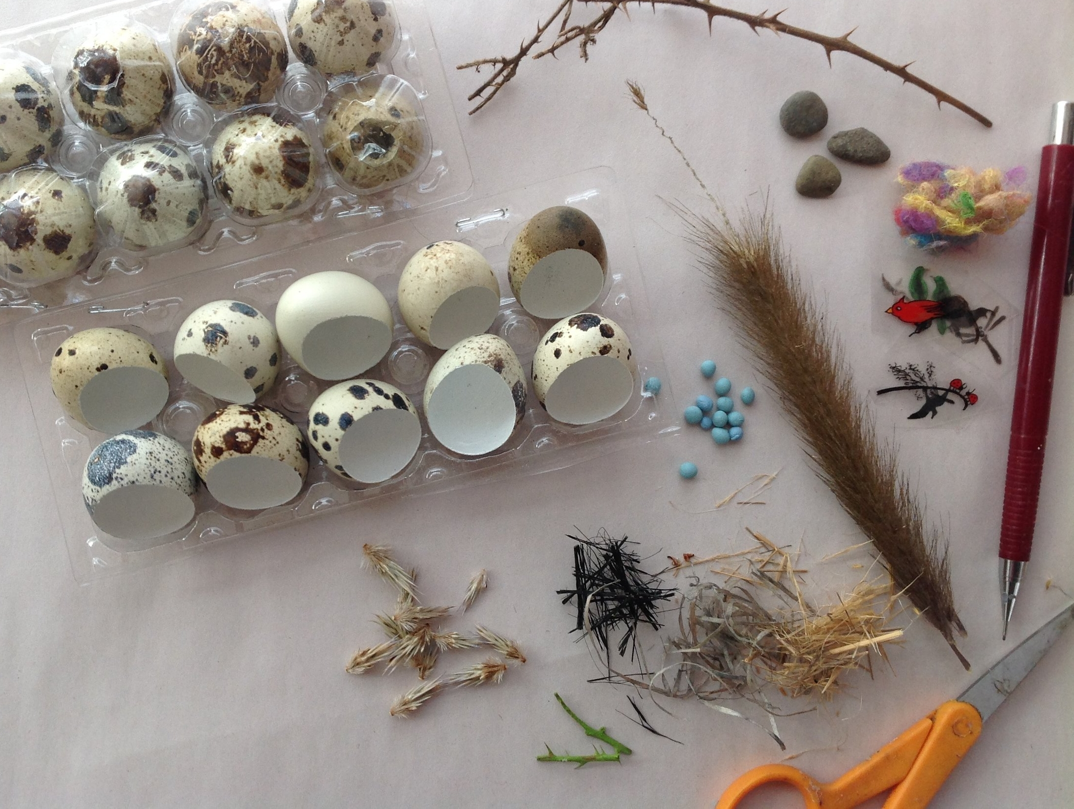 quail eggs - These pieces are made using real quail eggs, which come from domestic farms. (Quail eggs are popular in Asian and French cuisines.) The outside of the shells are left in their wonderfully speckled natural selves. They are filled with clear resin, so they are solid and no longer fragile.