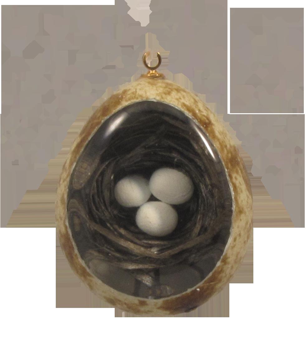 nest (of 3 eggs)