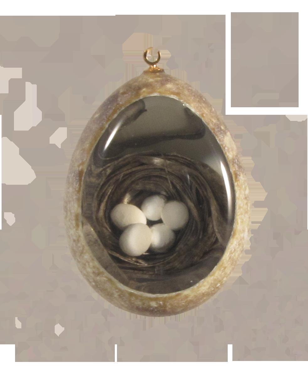 nest (of 5 eggs)