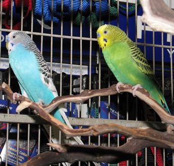 bird-parakeets-041808-1.jpg
