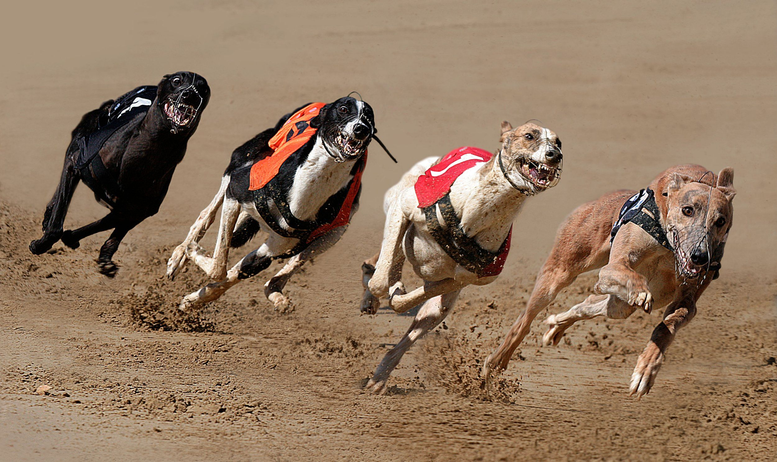GREYHOUND RACING -