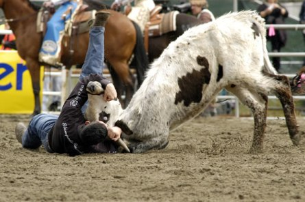 steer_wrestling.jpg