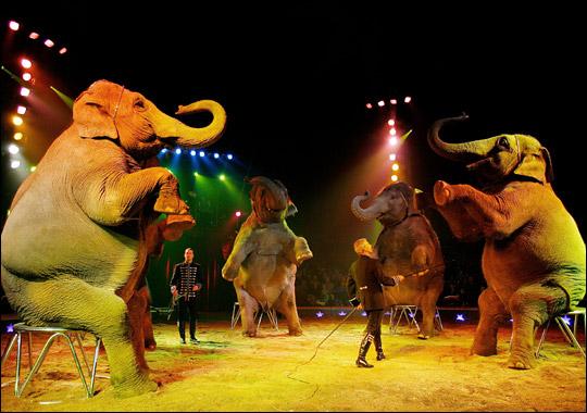 circus_elephants.jpg