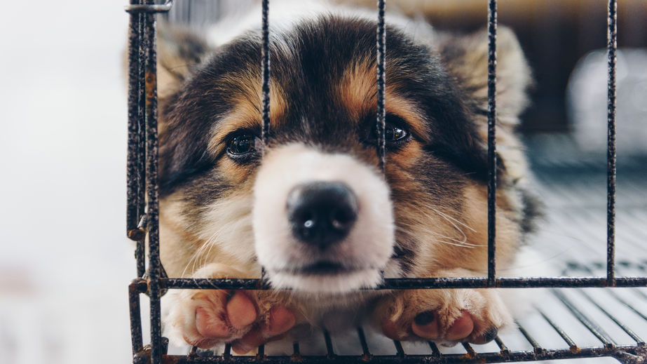 sad puppy in cage.jpg