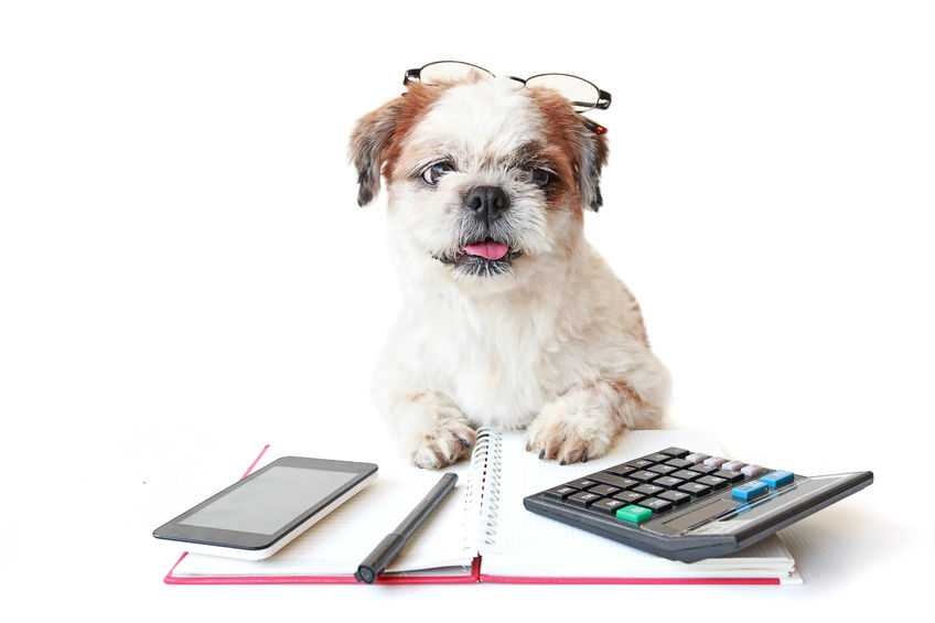 dog using calculator.jpg