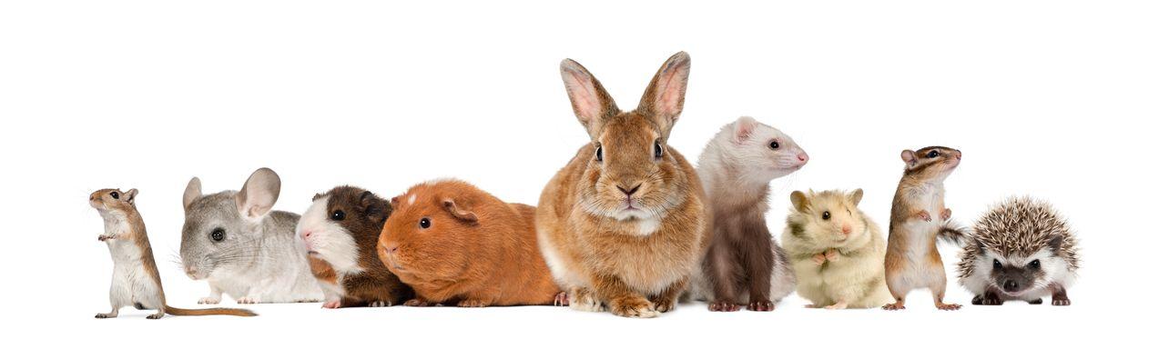small animal pets.jpg