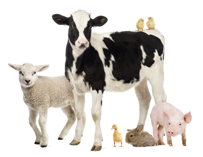 farm animal group.jpg