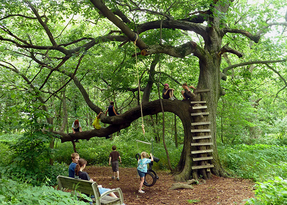 kids on tree with ladder and rope nature play slide show.jpg