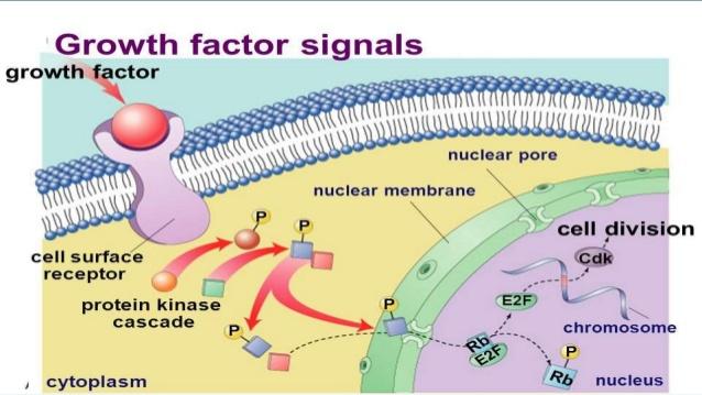 recombinant-growth-factors-7-638.jpg