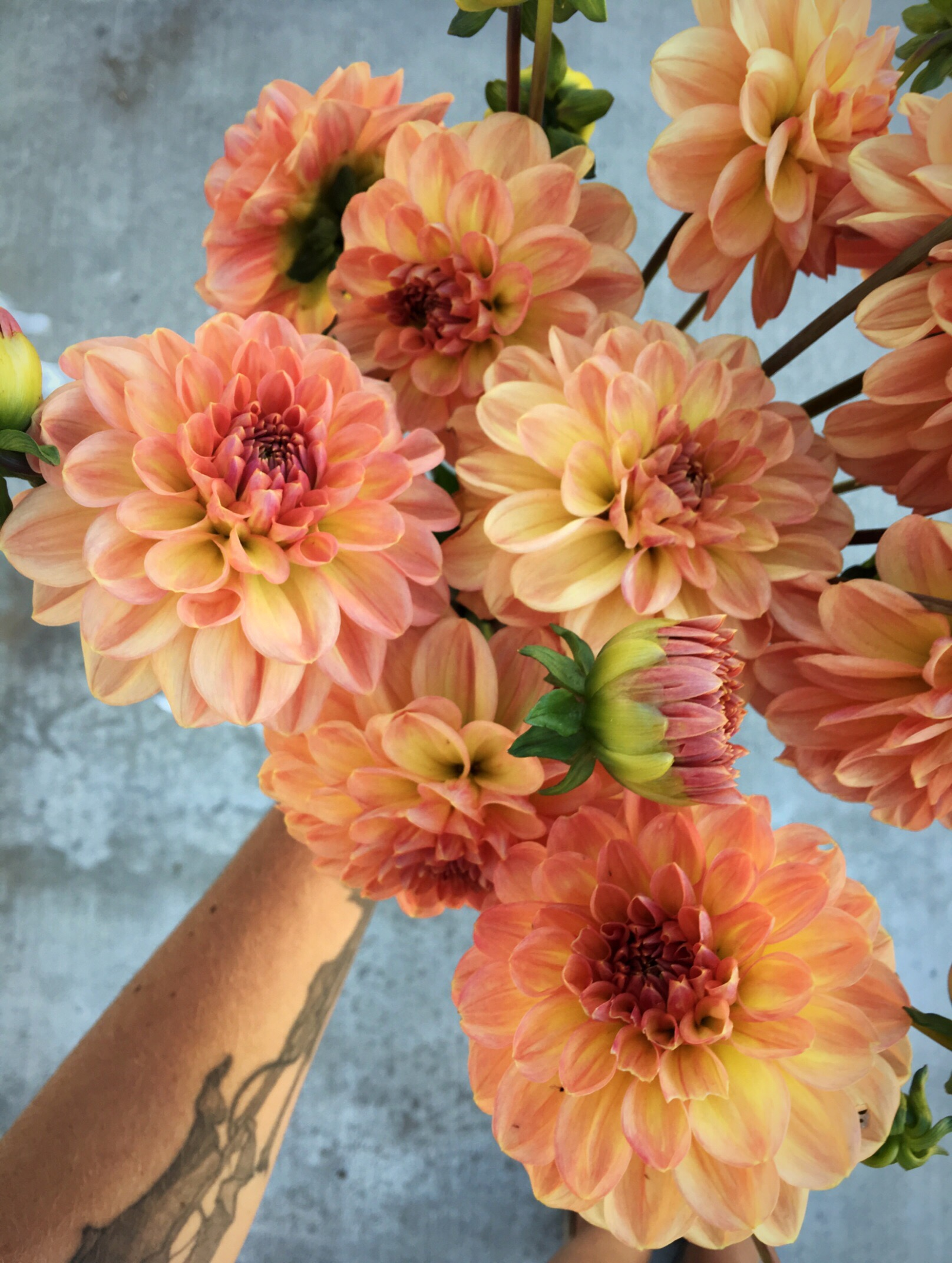 Cute organey-peachy dahlia