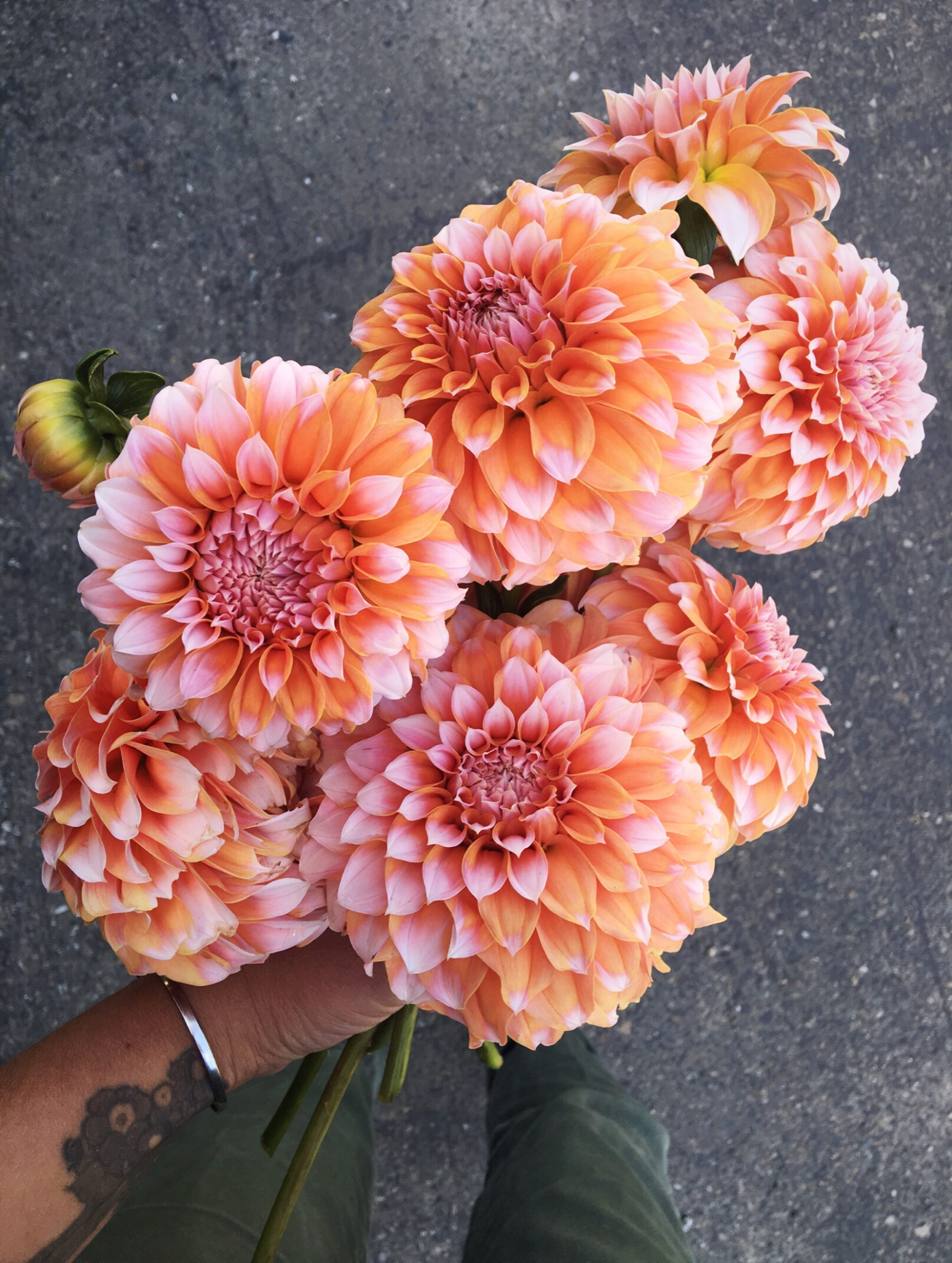 "LOTS of ""peaches n cream"" Dahlias"