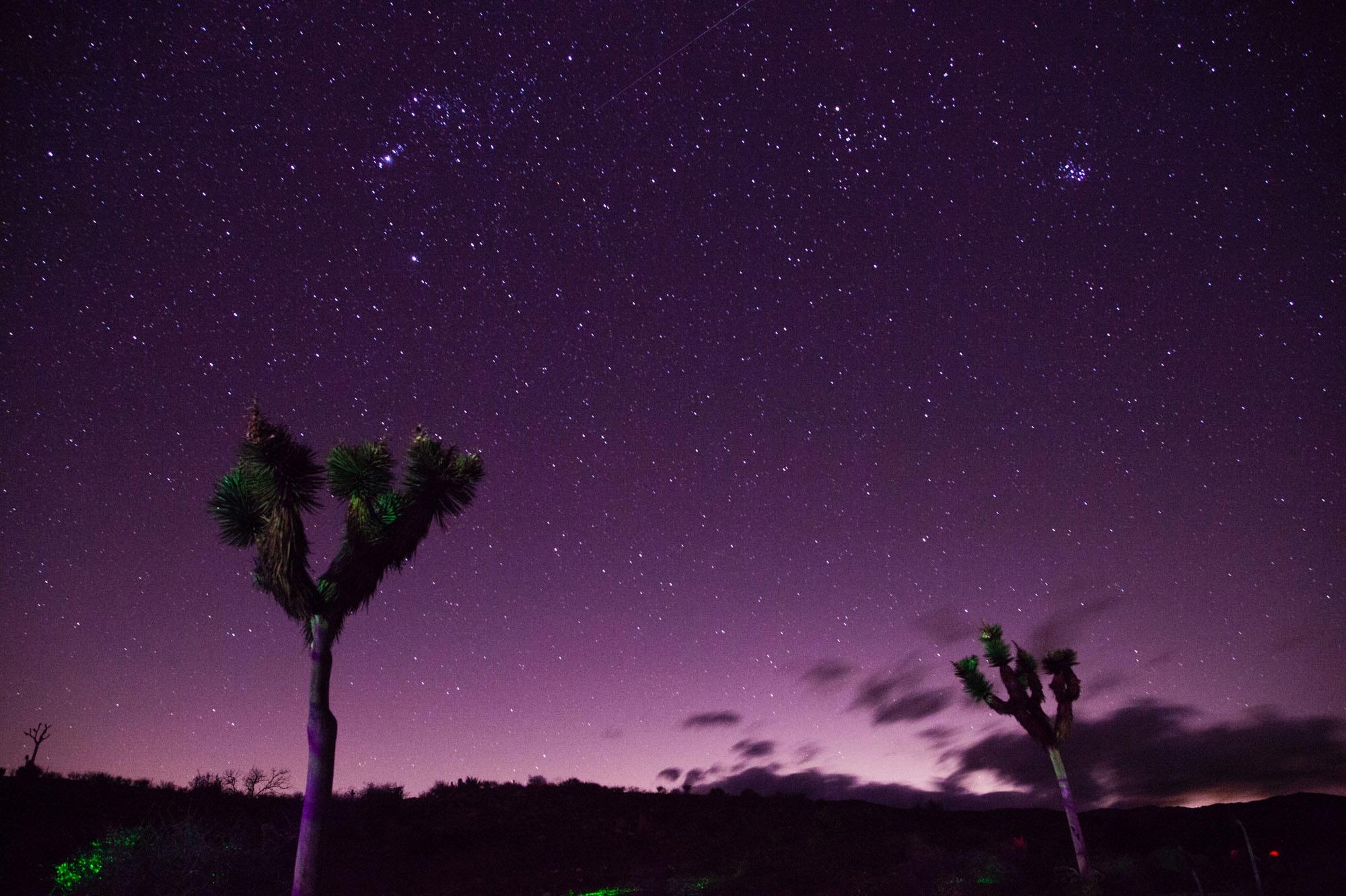 joshua-tree-purple-night.jpg