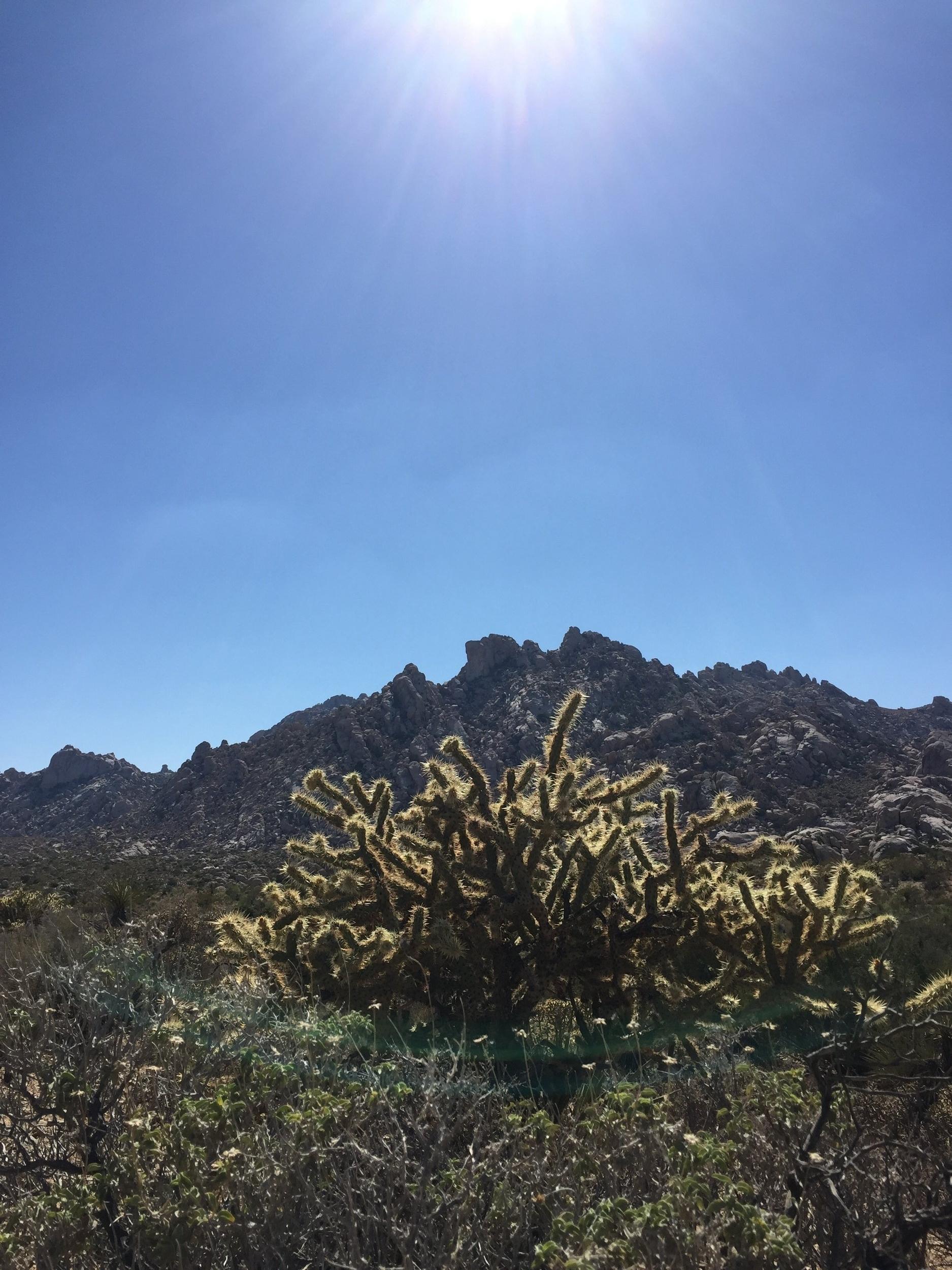 desert-hot-springs-cactus-sunshine.jpg