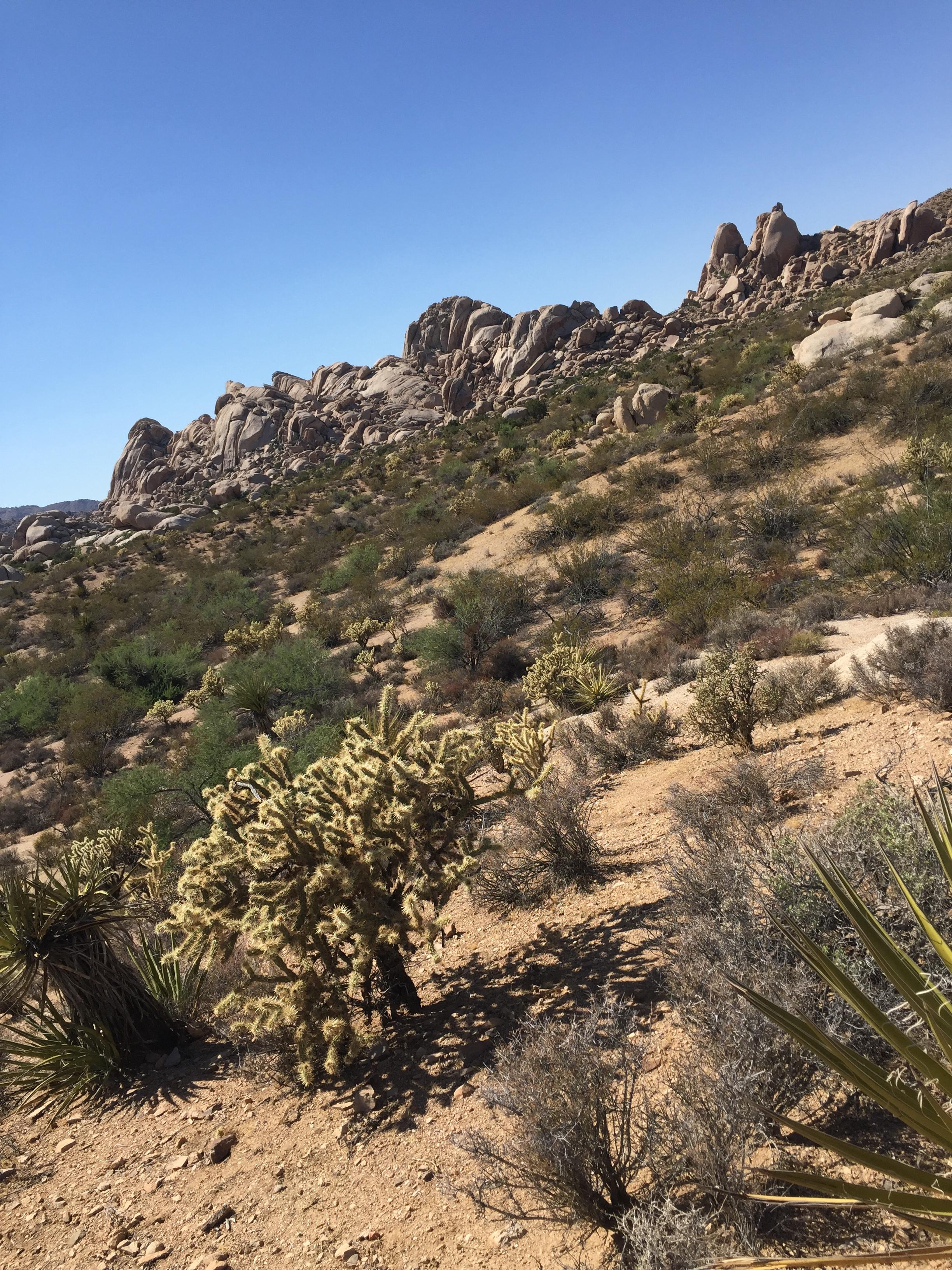 desert-hot-springs-desert-view.JPG