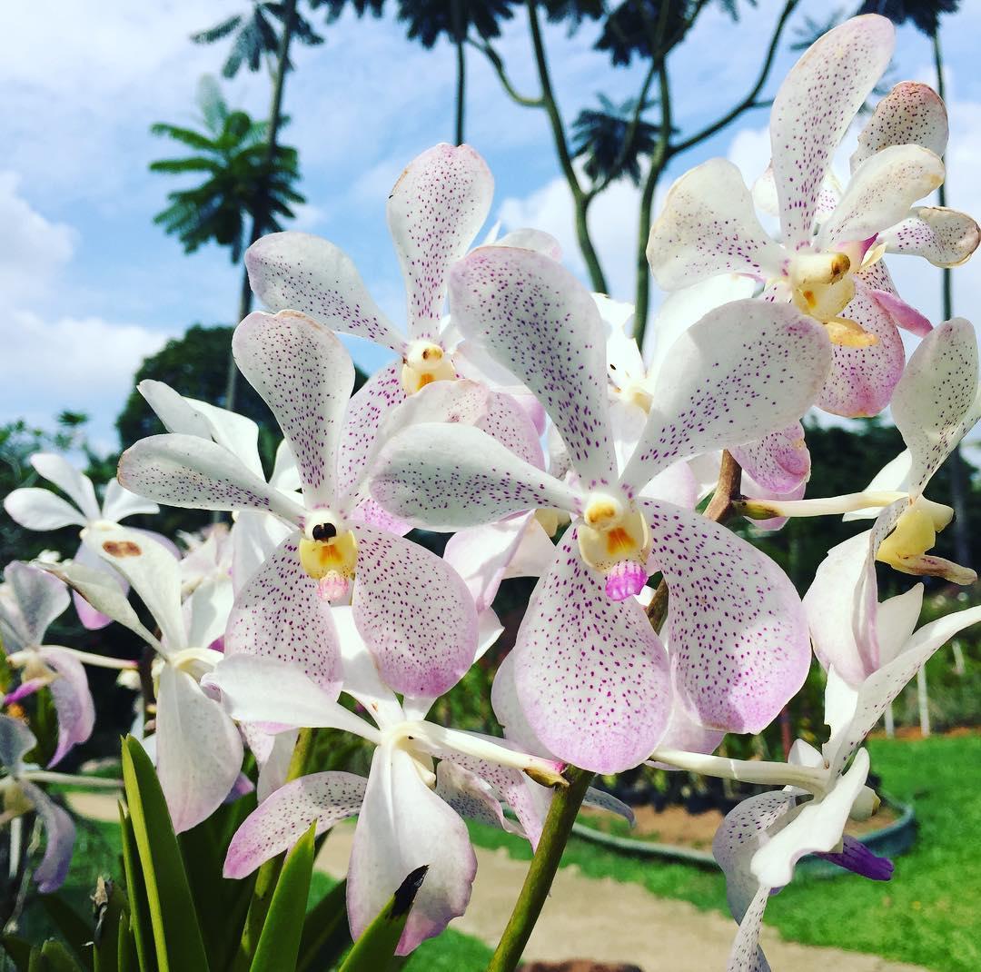 yoga-detox-retreat-kuala-lumpur-orchid-garden.png