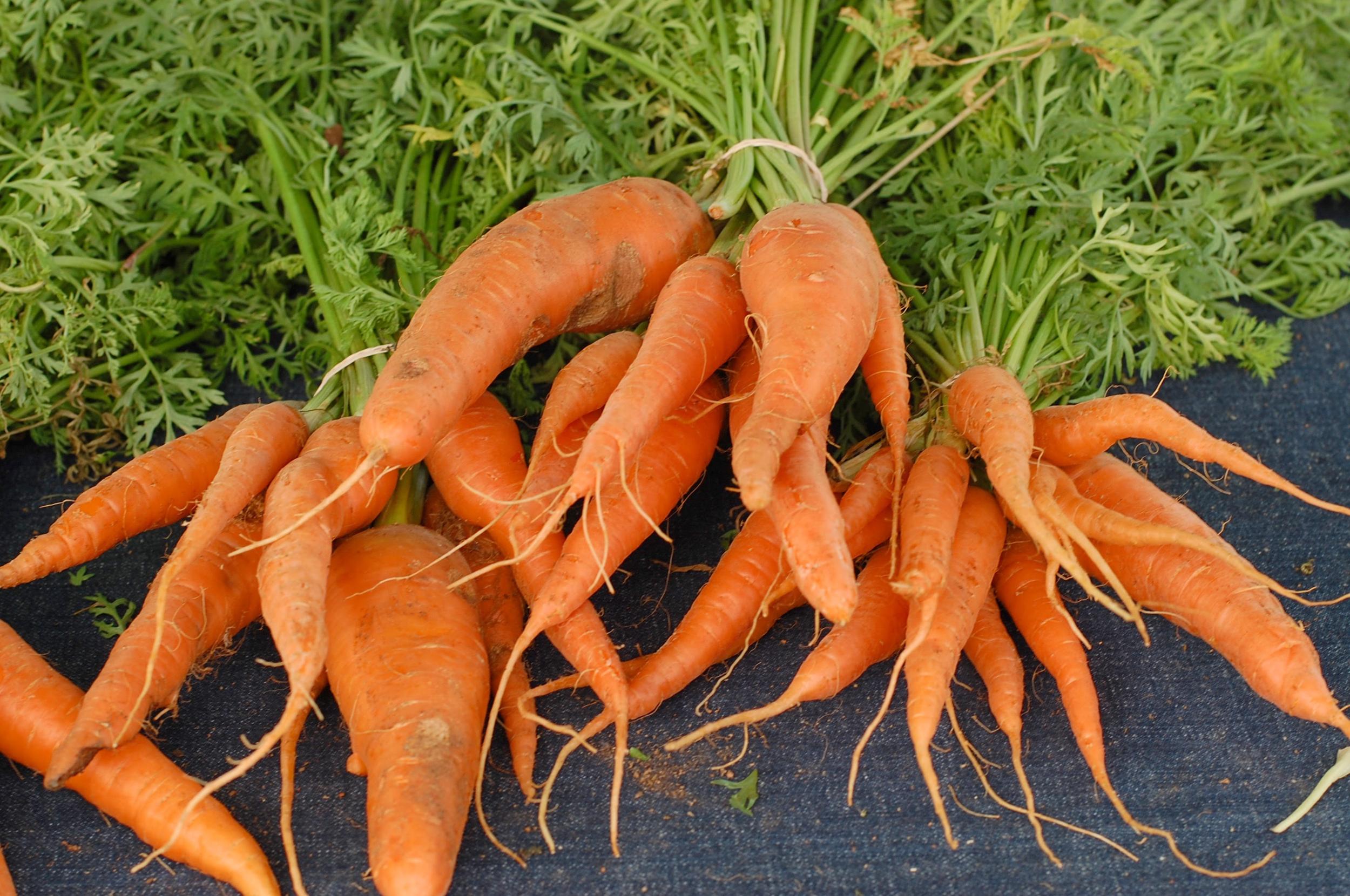 1 carrots.png