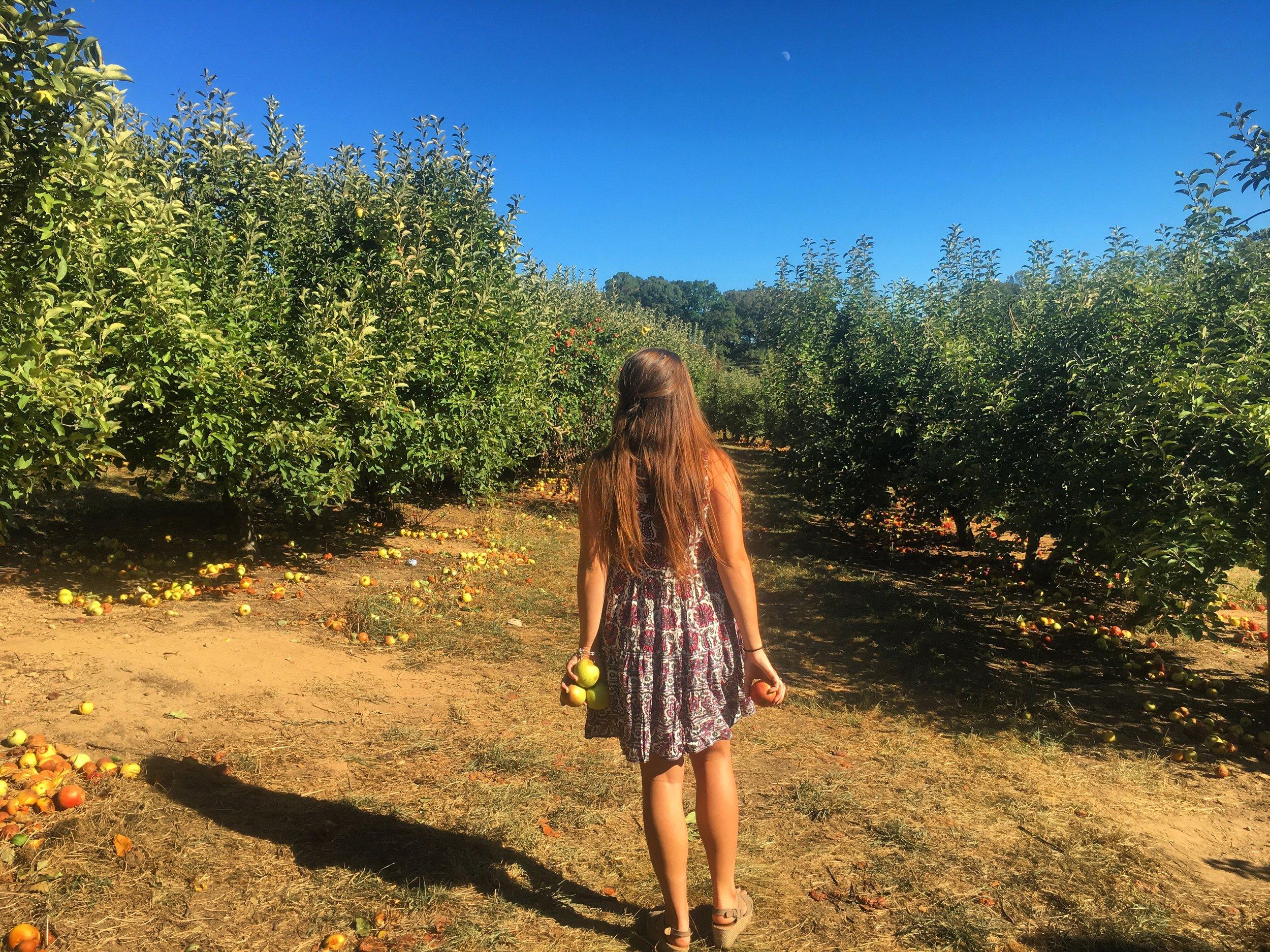 apple 4.JPG