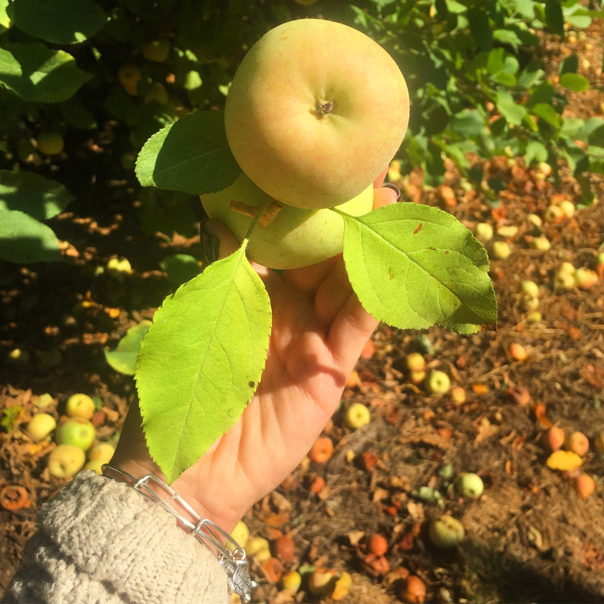 apple 8.JPG